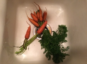 choosing a carrot